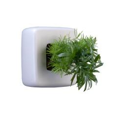 Cube en céramique blanc avec une composition de 2 plantes vivantes