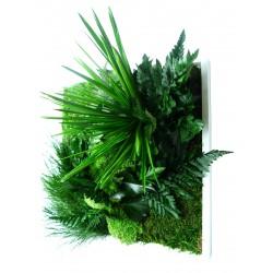 Tableau végétal stabilisé CARRÉ