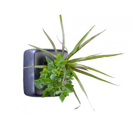 Cube en céramique métal avec une composition de 2 plantes vivantes