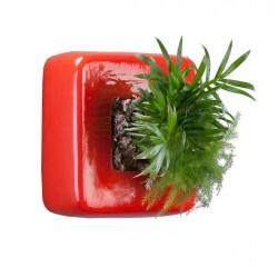 flowercube rouge