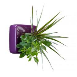 Flowercube violet avec 2 végétaux vivants