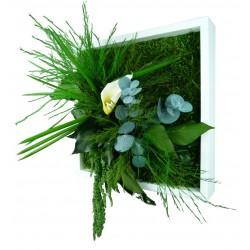 tableau vegetal stabilisé MONO