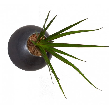 Flowerball métale avec végétaux vivants