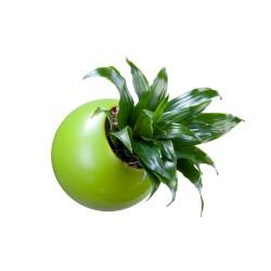 Flowerball verte avec végétaux vivants