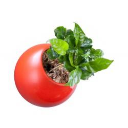 Flowerball rouge avec végétaux vivants