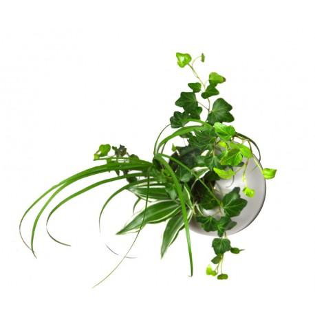 Flowerball blanche avec végétaux vivants