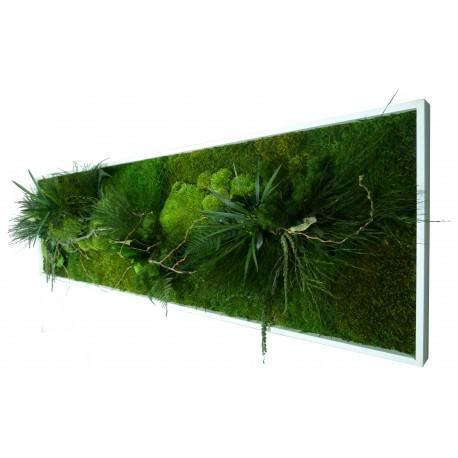 Tableau végétal stabilisé XL PANORAMIC